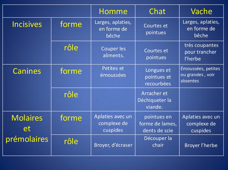 Alimentation Chez Les Tres Vivants Cours Alloschool
